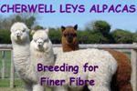 Cherwell Leys Alpacas