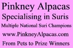 Pinkney Alpacas - Specialising in suris