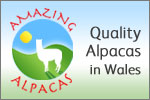 Amazing Alpacas