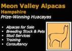 Meon Valley Alpacas
