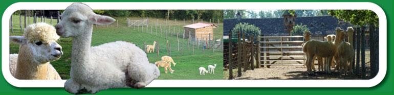 Aquitaine Alpacas