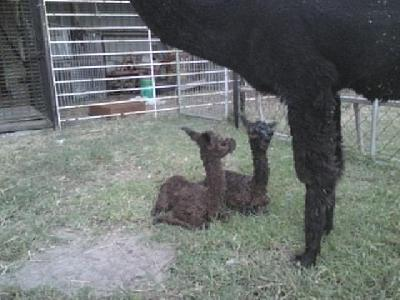 Twins born 29/01/2009