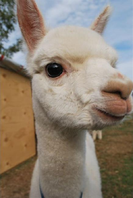 Inquisitive cria