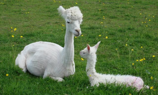 Relaxing with Mum! Only born half an hour ago!