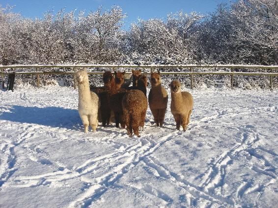Winter Weanlings - we'll just keep eating!!