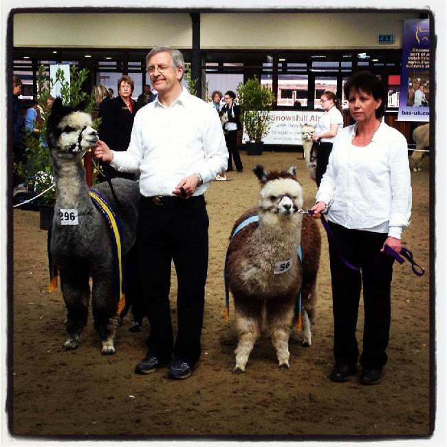 Savanna won Championship Reserve in the Female Grey class at The Southwest Group 2012 Spring Show