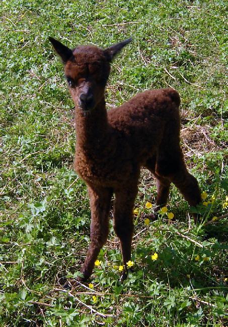 CJ Cajou - 1er naissance 2012