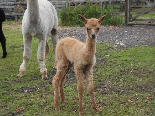 Firstcria for Bearhouse Valentino - Romeo - born 16th September 2012