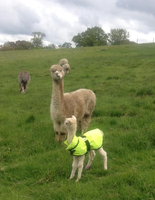 Mum doesn't like my coat!