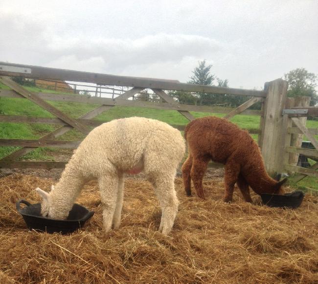 Cria Feeding
