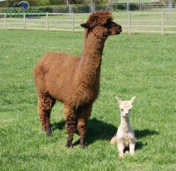 Cria and mummy