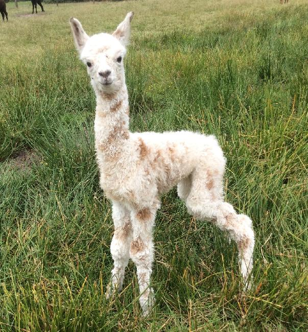 Bearhouse Perdita - born 16th August 2015