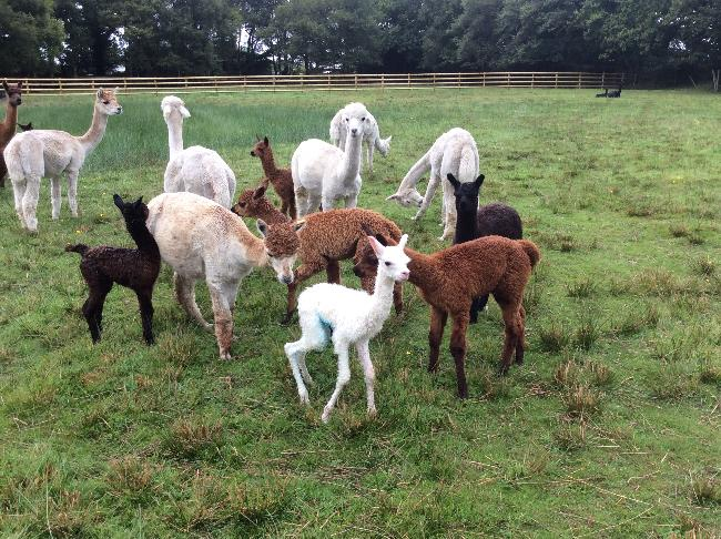 Welcoming Tutu's new cria to the world!