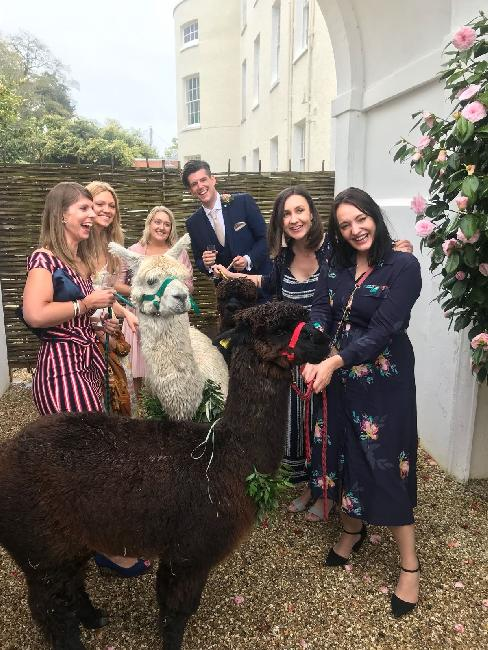 Wedding at Rockbeare Manor, April 2018.  Alpacas courtesy of Bearhouse Alpacas