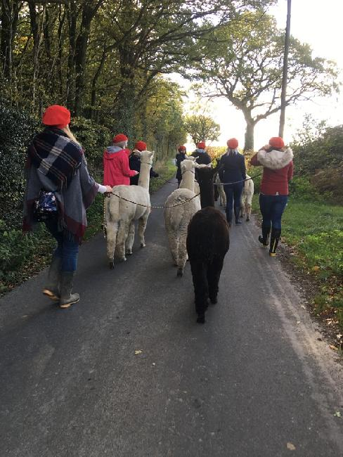 Alpaca trekking hen party! October 2018