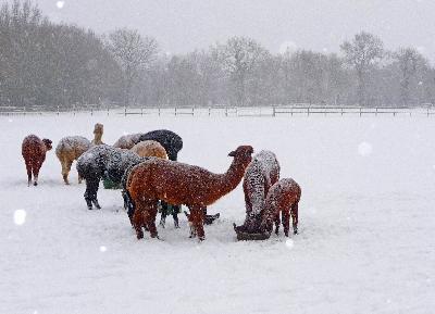 It' snow fun here!!