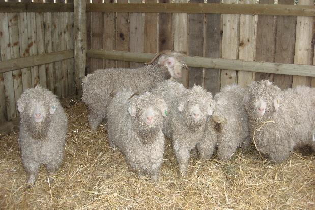 New arrivals at Laurel Farm