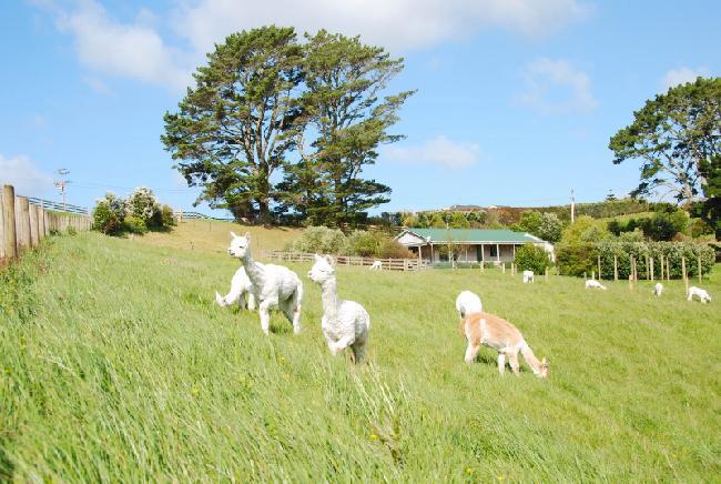 Waimauku Farm