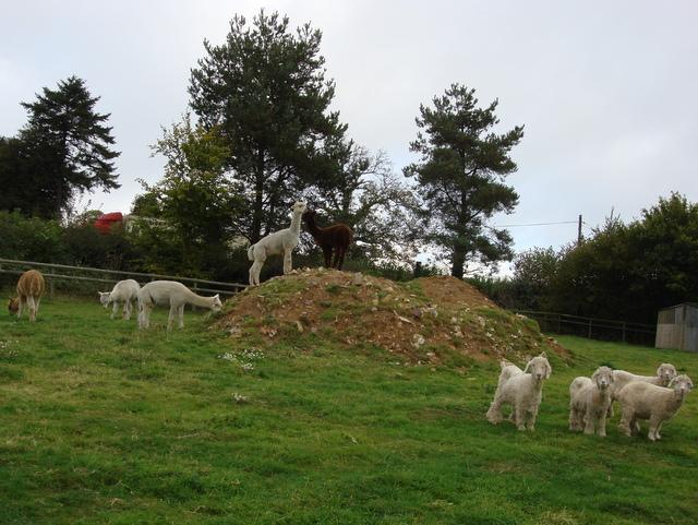 Climbing Goat Mountain