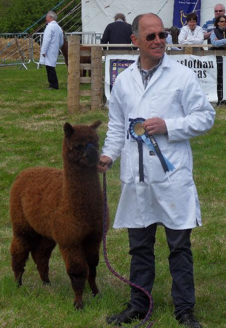 Bearhouse Kiara - 1st prize Junior Brown Female - Devon County Show 2013