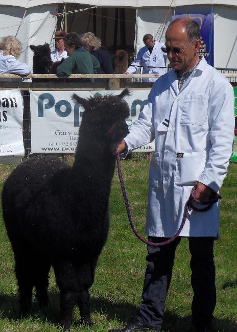 Bearhouse Aphrodite - 2nd Intermediate Black Female - Devon County Show 2013
