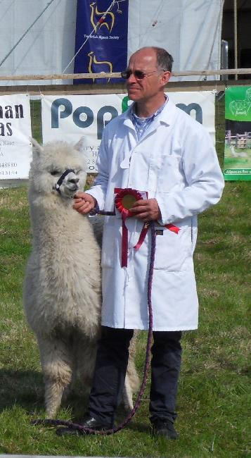 Bearhouse Herodotus - 2nd Junior Male Light Fawn - Devon County Show 2013