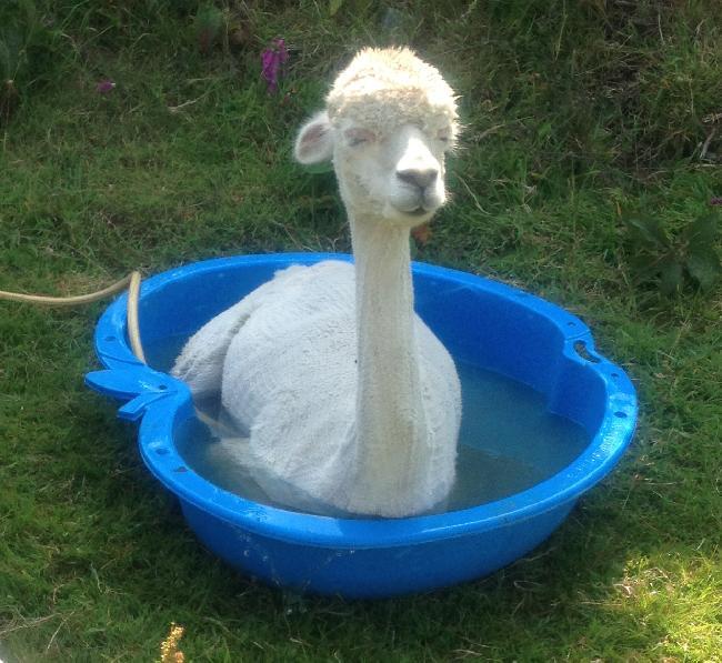 Georgie in the birthing pool!