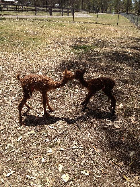 Newborn kissing cousins