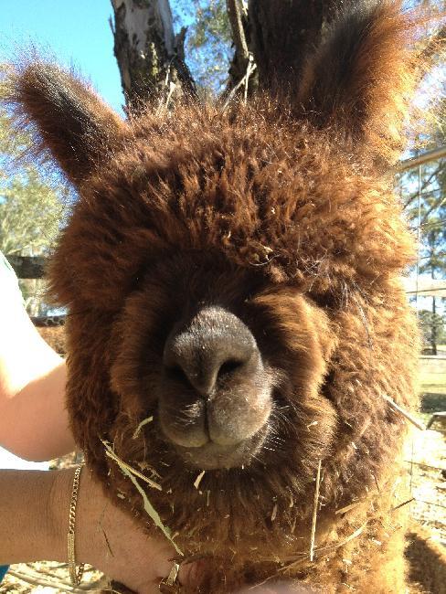 Isa Manuka - Yes ! I do have eyes.....somewhere under all this fleece