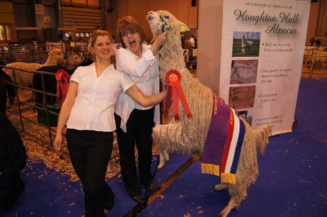 2013 British Futurity Best Suri in Show Houghton Hall Monica