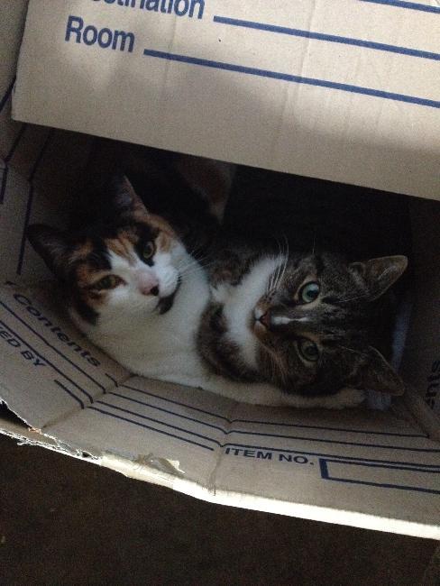 BARN CATS WORKING HARD
