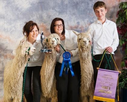 Travatores Progeny won 1st at Alpaca Showtime 2014