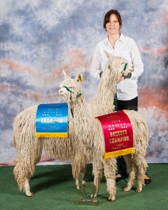 Alpaca Showtime 2014
