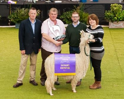 Mick & Liz receiving trophy for Alpaca Showtime 2014 Supreme Champion Suri