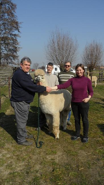 Houghton Tequila Delivered to his new owners Top-Line Alpacas in Belgium