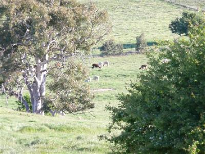 Girls in the Bore Paddock, October 2008