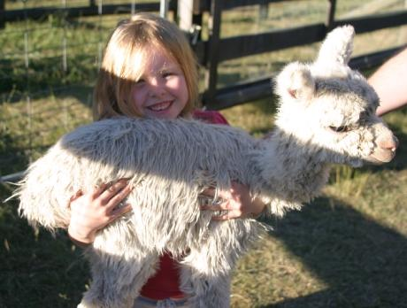 Anja Tyson holding a young cria during her farm tour...