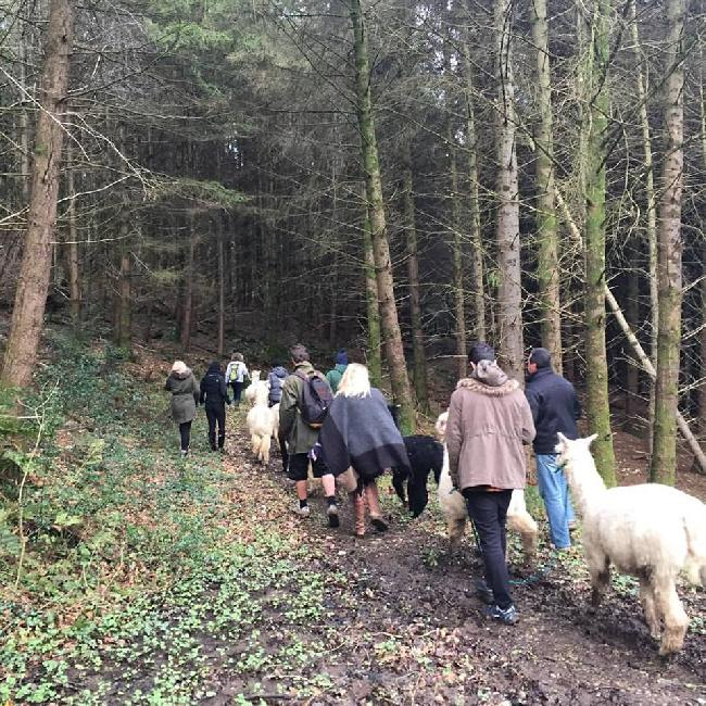 Alpaca trekking - January 2016