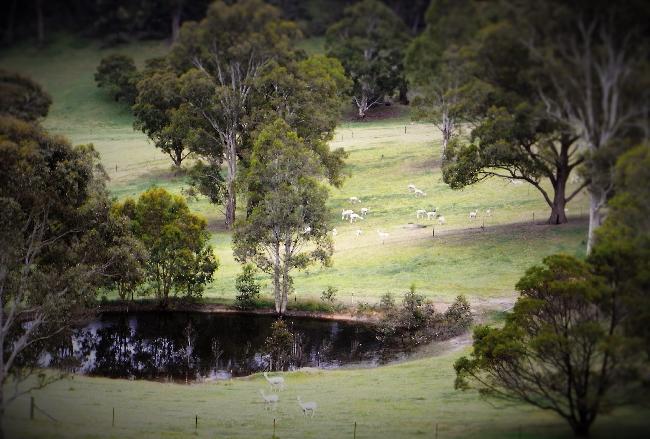 Alpacas around the dam