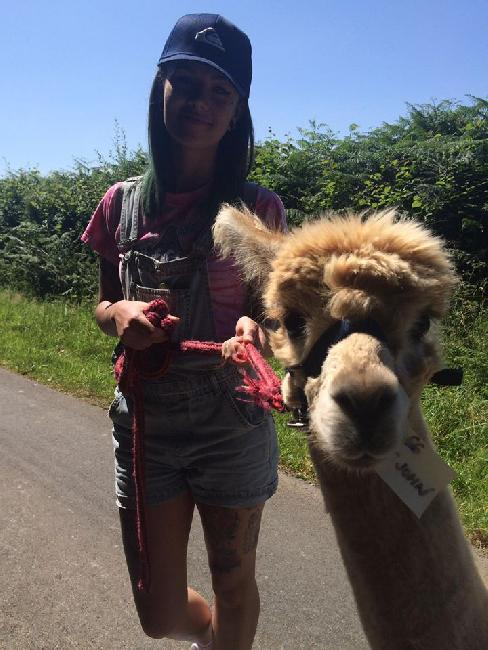 Alpaca trekking with Bearhouse Alpacas - 2016