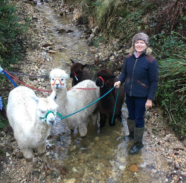 Pippa Westall - alpaca trekking, Bearhouse Alpacas