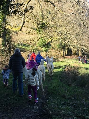 Alpaca trekking birthday party - Feb 2018