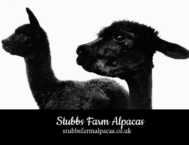 Farm photo for Stubbs Farm Alpacas